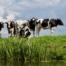 Biologisch-vlees-is-geen-betere-keuze