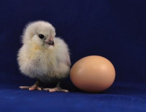 Eivrij Pasen! Wat zijn goede ei alternatieven?
