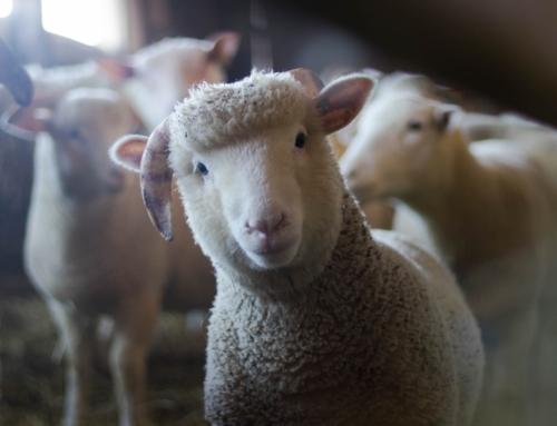 Nieuwjaarsboodschap NVV aan de dieren