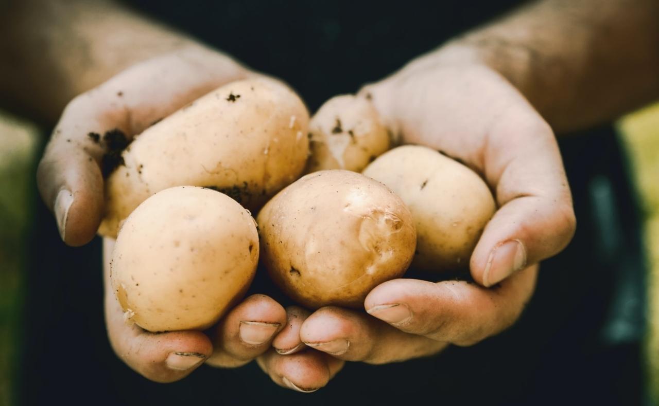 Aardappels in twee handen