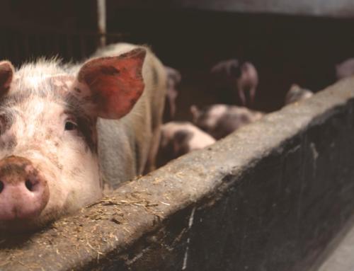 """Varkensgehakt verkocht als """"vegetarisch"""". NVV dient klacht in."""