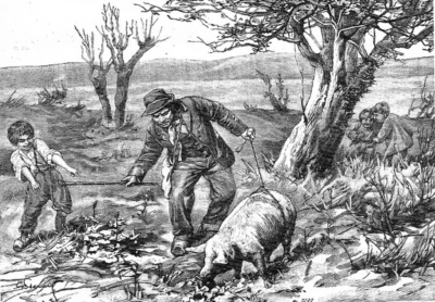Truffeloogst in 1905