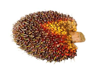Palmvrucht
