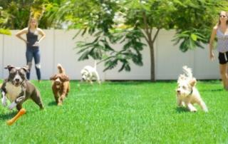 Vegan honden