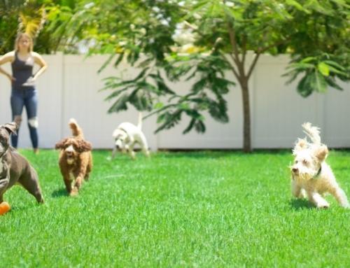 Vegan Honden: (geen) dierenmishandeling?