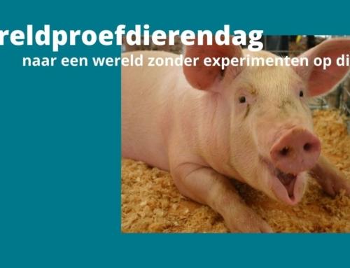 Wereldproefdierendag – naar een wereld zonder experimenten op dieren